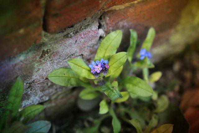 Spring garden Norfolk 2013