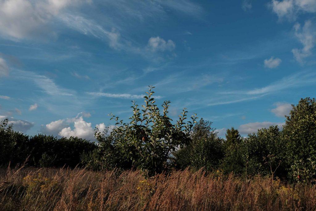 Evening walk in August (4)