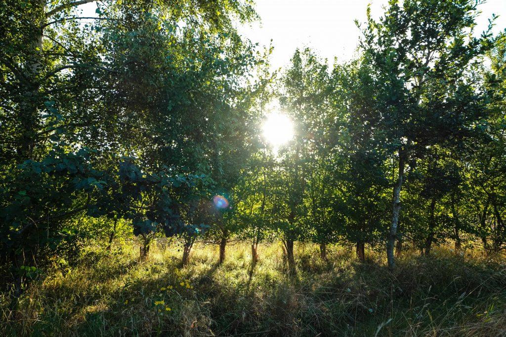 Evening walk in August (6)