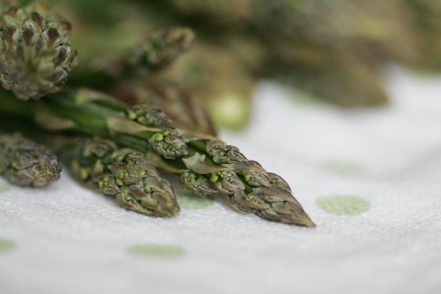 Norfolk Asparagus (1)