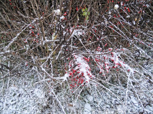 Snow Blog (8)