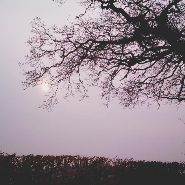Misty March sun (1)