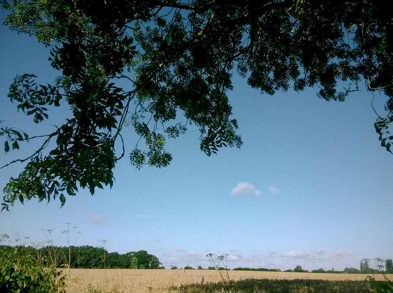 Morning walk 11th August (1)