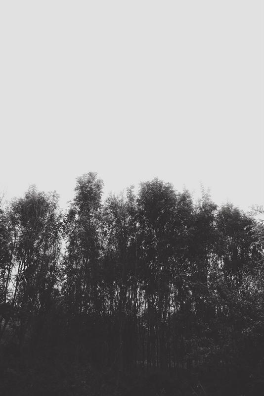 Three go mad in Reepham (13)