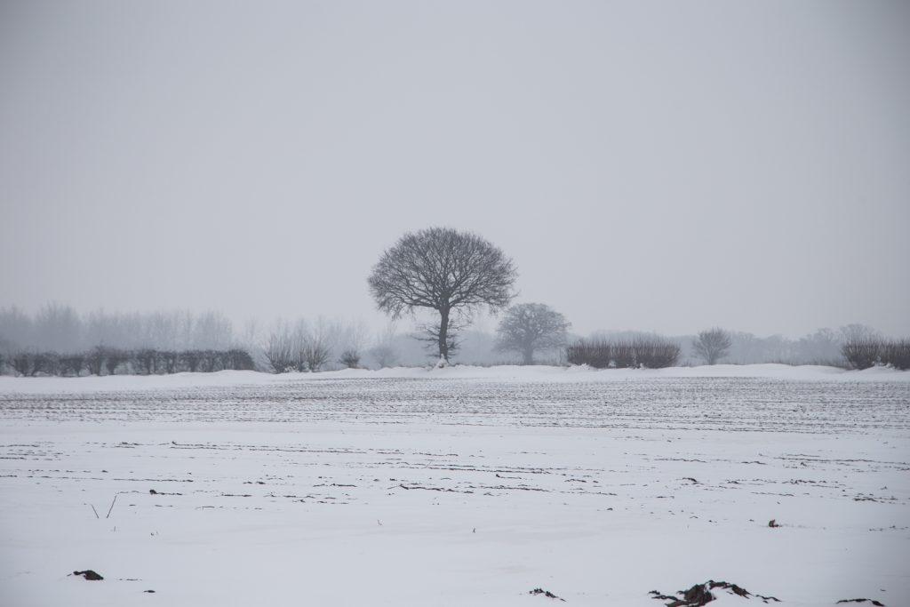 Snow walk-10