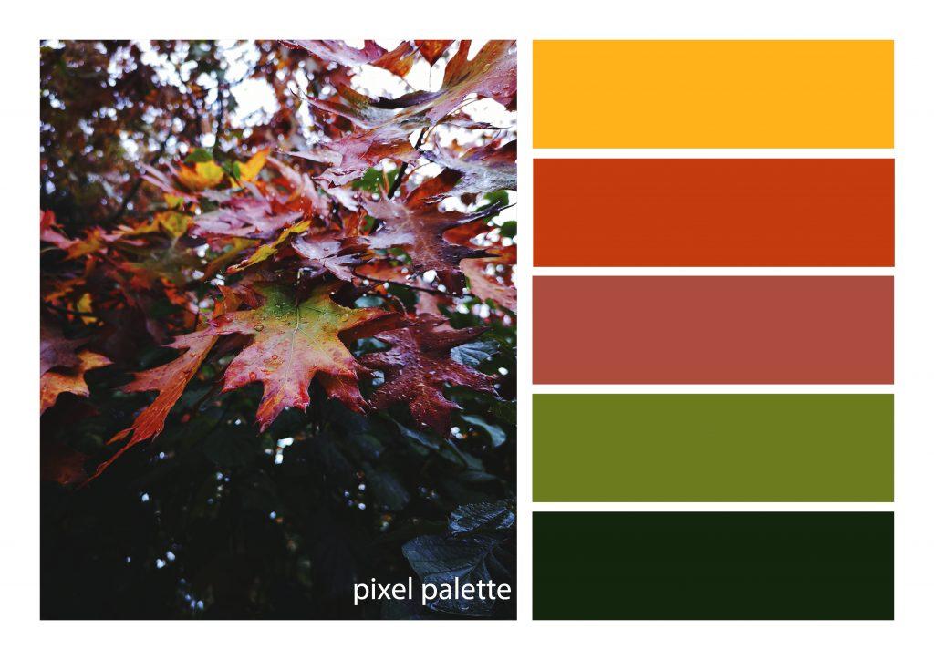 Autumn palette7
