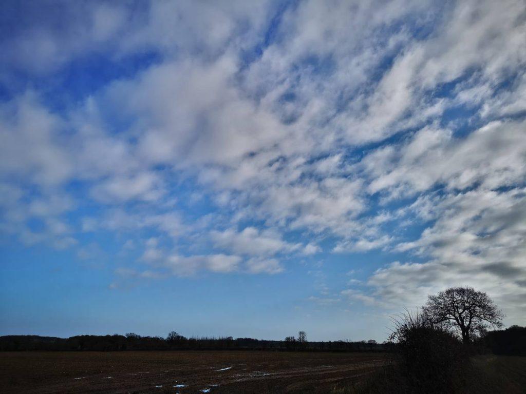 Feb morning walk740