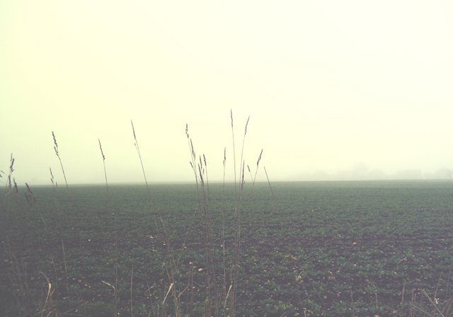 Foggy morning Norfolk